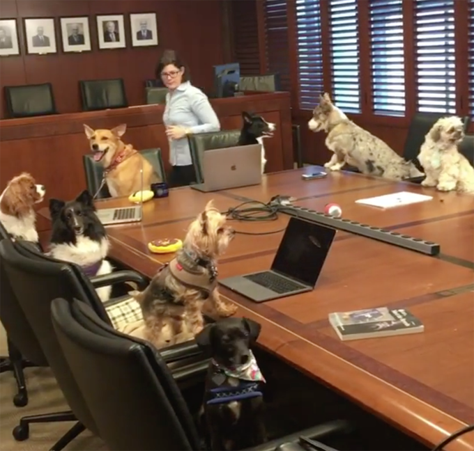 Take your dog to work day.