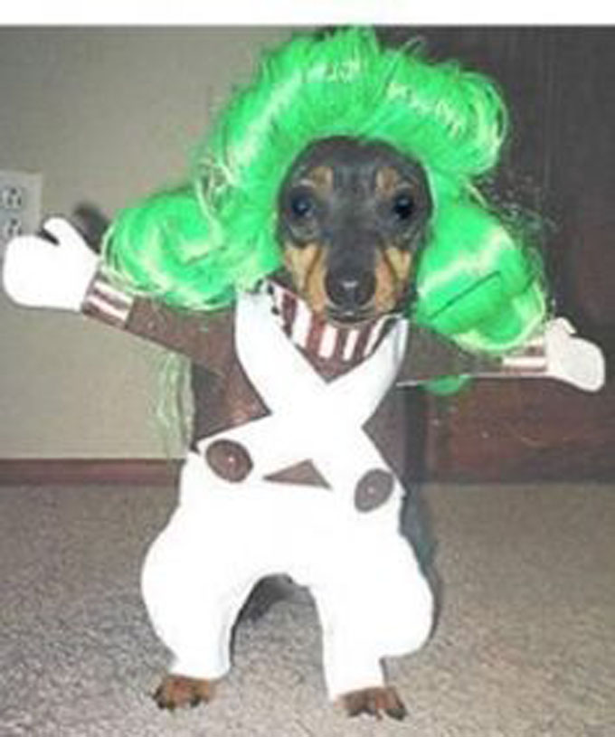 Weiner Dog Halloween Costumes | Top 10 Halloween Costumes For Wiener Dogs Gallery Dogtime
